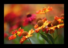 fire in the flowerbeds by obenson