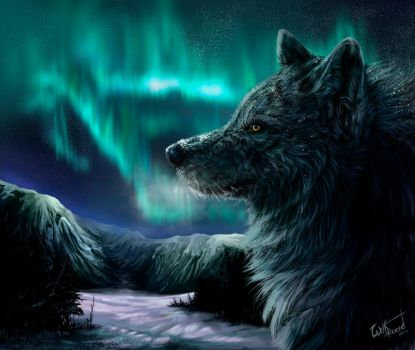 Northern lights by WolfRoad
