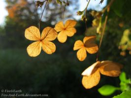 Translucent Autumn Flowers by Fire-And-Earth