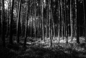 Black forest by Dragomint