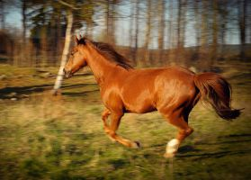 Running free by Elfvingphotography