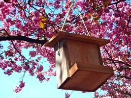 Bird Feeder by xDNarnian