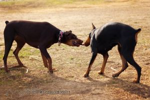 Tug of War by KateIndeed