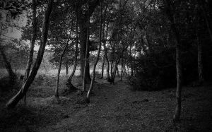a woodland path by awjay