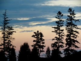 Tree Silhouettes at Sundown by Michies-Photographyy