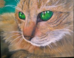 Somber Cat with different eyes by laura888