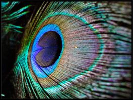 Peacock Feather Stock by AppleLily