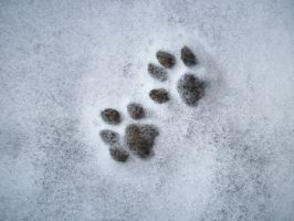 Paws in Snow by Becky125