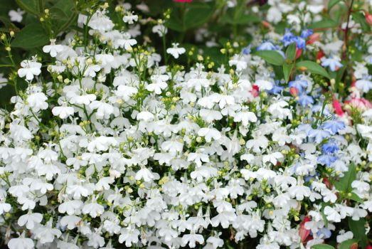 White flowers stock by Quinnphotostock