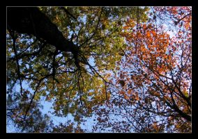 Tree Top by IsaFortyThirty1