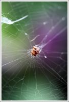 Rainbow Spider by Emilie25