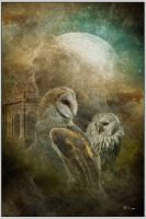 magic of owl by greenfeed