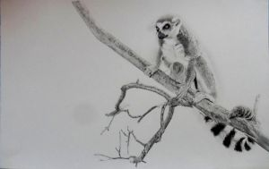 Lemur by LukeT66