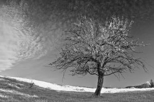 The tree 2. by lica20