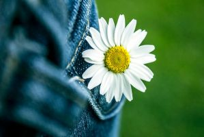 Pocket Full of Daisies by akrPhotography