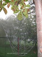 spiderweb by mbamboo