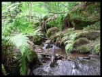 Little brook in the forest by Solkatt