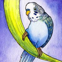 Blue Budgie Watercolor by stanleyillustration