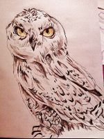 Owl by Panicatthedisco7