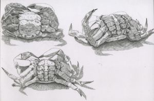 Crabs studies by jmhoth