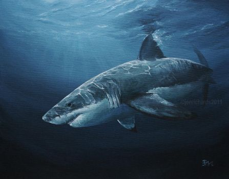 Carcharodon carcharias by odontocete