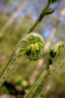Fern Family by Geak-of-Nature