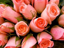 Pink Sweetheart Roses by muffet1