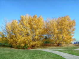 Autumn Tree 194-2 by schon