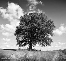 The tree 4 by orlibraorli