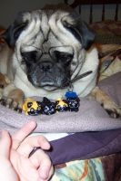 Milo and the pugs by JillyFoo