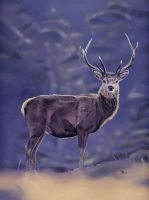 Red Deer by DryJack