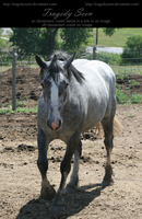blue roan stock 98 by tragedyseen
