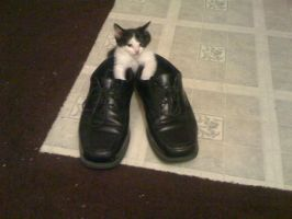 Walk a mile in my shoes by lovechairmanmeow