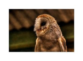 Barn Owl HDR by Dr-Koesters