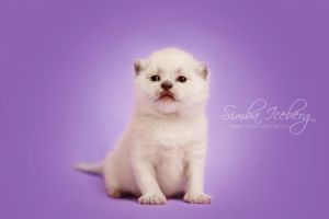 Am I cute? by Katrin-Elizabeth