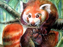 Palling Around- Red Panda closeup by ExiledChaos