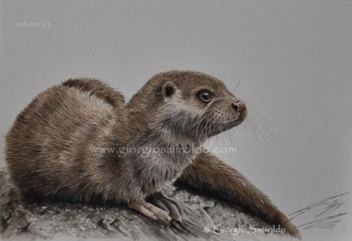 River otter - waterolor by selvatico3