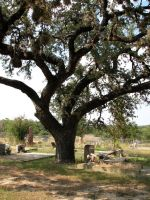 Cemetery Tree 1 by Altaria13-Stock