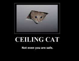 CEILING CAT by deazralei