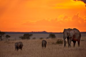 My Africa 15 by catman-suha