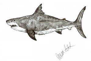 Megalodon by Teratophoneus