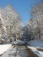 Wisconsin Woods Winter Road 4 by FantasyStock
