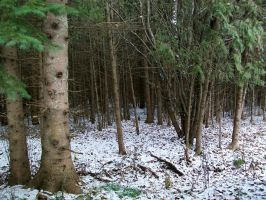 First Snow in Woods II by Jenna-RoseStock