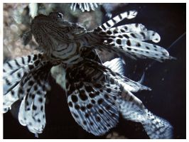 the great lionfish by jneia