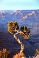 Grand Canyon2 by svancobra