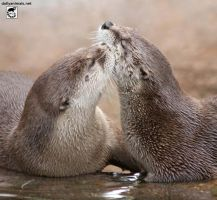 Otter kisses by jaffa-tamarin