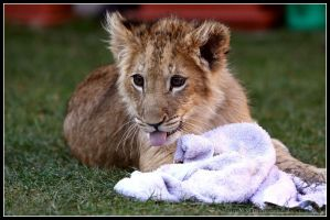 The cuddly towel by AF--Photography