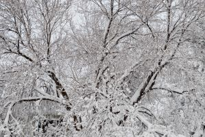 Snow Plastered Branches by Chiller252