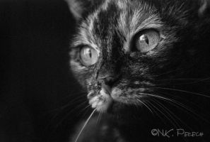 Cat by Alveaner