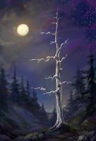White spruce by Vitcer